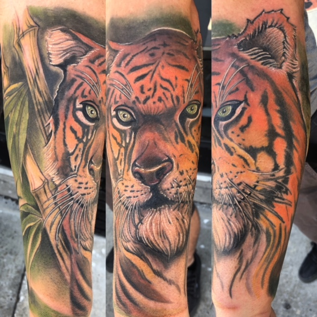 St Pete Tattoo Tiger in Bamboo by J Michael Taylor